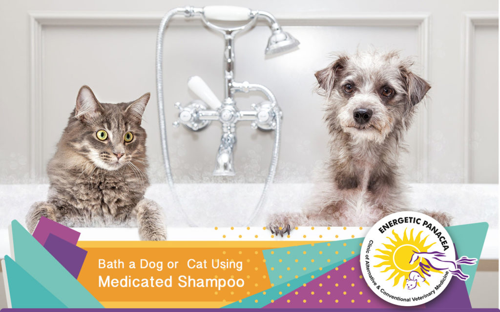 How Often Can Cats Be Bathed